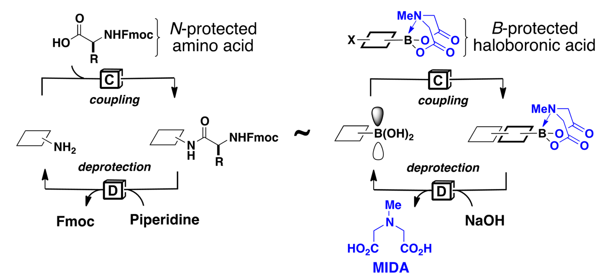 Figure 1. Iterative peptide synthesis and iterative cross-coupling