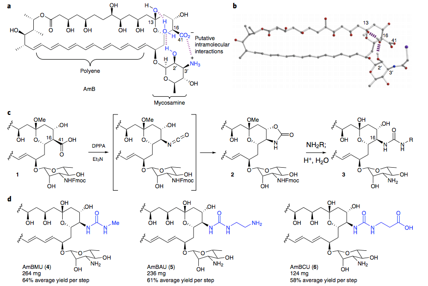 Design and synthesis of AmB ureas.