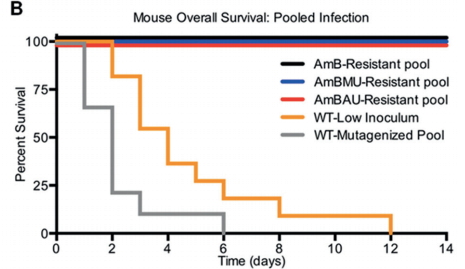 Mice survival following injection of AmB-resistant strains, AmBMU-resistant strains, AmBAU-resistant strains, parental wild-type (WT-low) strains, or mutagenized wild-type mutants (WT-mutagenized) strains.